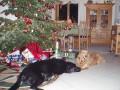Hundeweihnacht